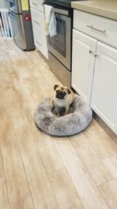honey in her bed in the kitchen