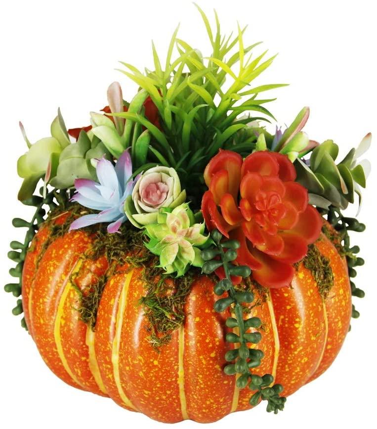 orange succulent pumpkin