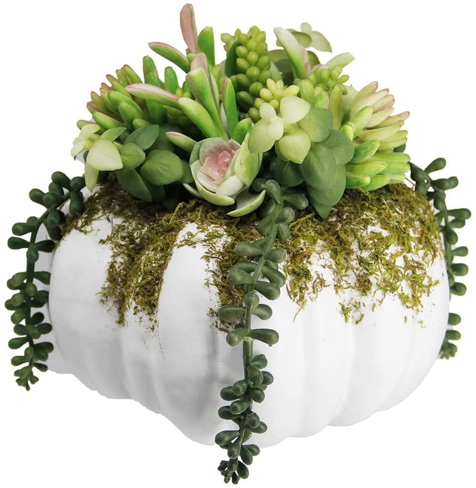 white succulent pumpkin