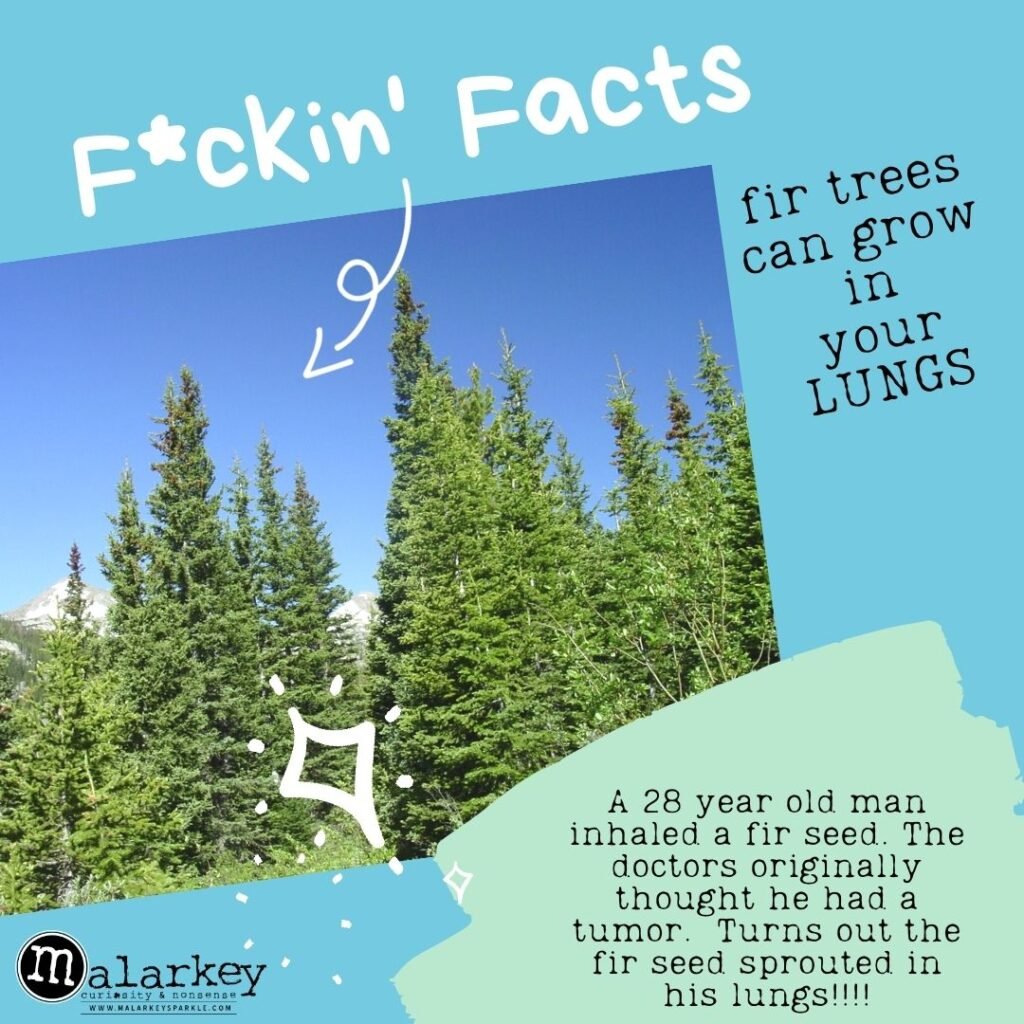 facts malarkey fir trees